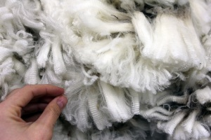 merino wool fleece hand (1)